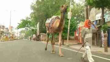 A 70-year-old man walked from Ludhiana to Gorakhpur with camel