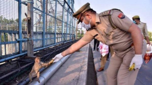 फोटो खिंचते ही केला लेकर चंपत हुआ बंदर