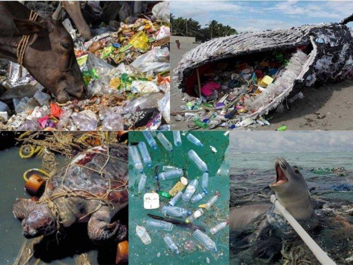 प्लास्टिक, बैनिंग