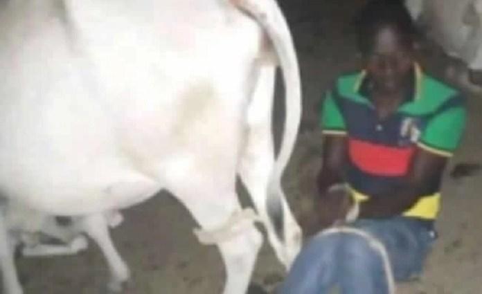 गाय सेक्स भोपाल