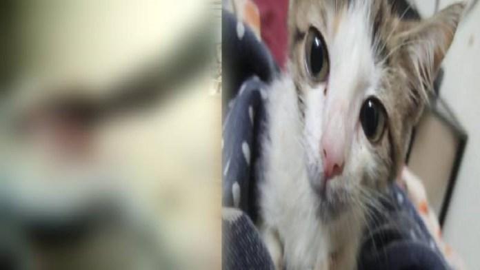 बिल्ली पाकिस्तान गैंगरेप