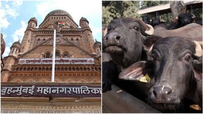 महाराष्ट्र, बकरीद