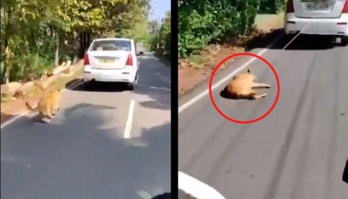 केरल में कुत्ते को गाड़ी से बाँध कर घसीटा गया