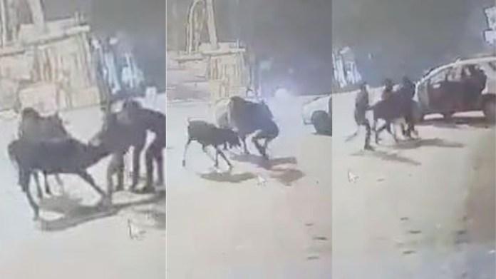 गाय चोरी