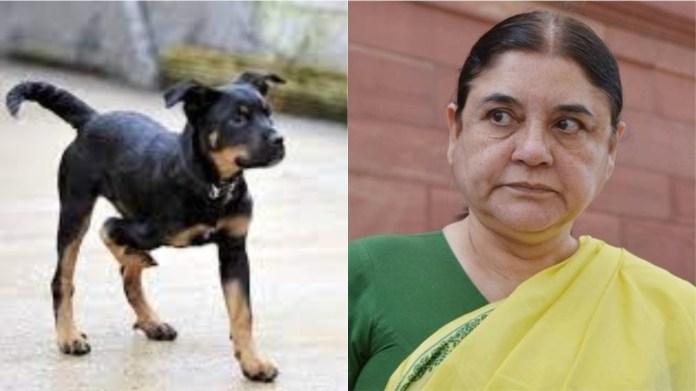 कुत्ते के इलाज से नाराज मेनका गाँधी