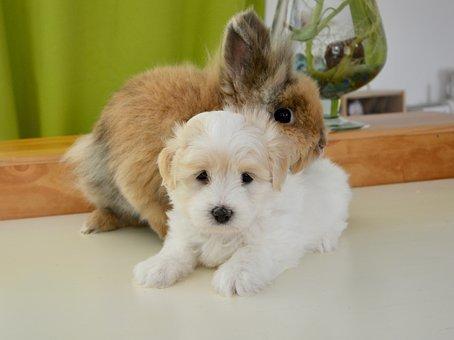 Dog and Rabbit Story in Hindi