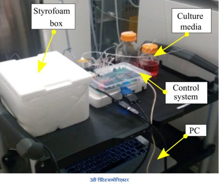 Scientists develop brain tissue with 3D printed bioreactors