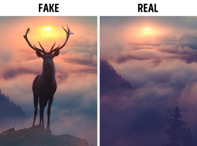 10+ Real Stories Behind Viral Photos