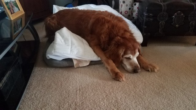 15 Pets Who Couldn't Stay Awake for One More Second
