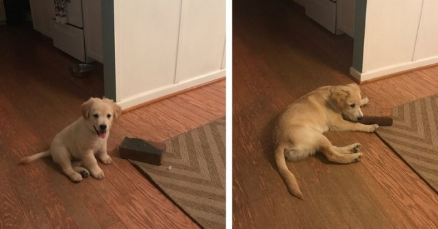 20+ Photos Proving That Dogs Have Their Own Kind of Logic