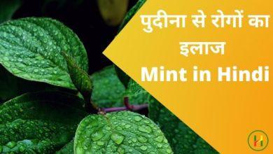 Photo of पुदीना से रोगों का इलाज – Mint in Hindi