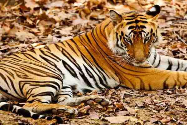 International Tiger day speech