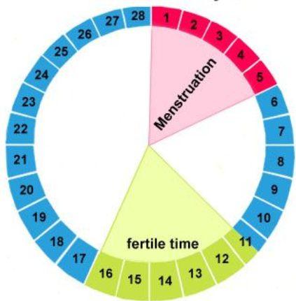 ovulation checker