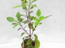 ghar ke liye best plant