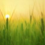 कृषि में नई आधुनिक तकनीक कौनसी है?और कैसे प्रयोग करे?Which New Techniques In Agriculture and How To Use It