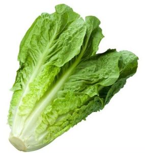 Salad Green Leaves
