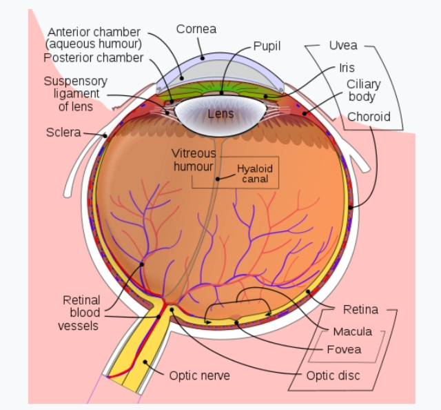 About eye in hindi