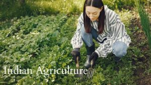 Read more about the article Indian Agricultural, Meaning, Challenges Government Scheme