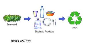 Read more about the article What is Bioplastics, Meaning, Definition, Types, Advantages of Bioplastics, Disadvantages of Bioplastics