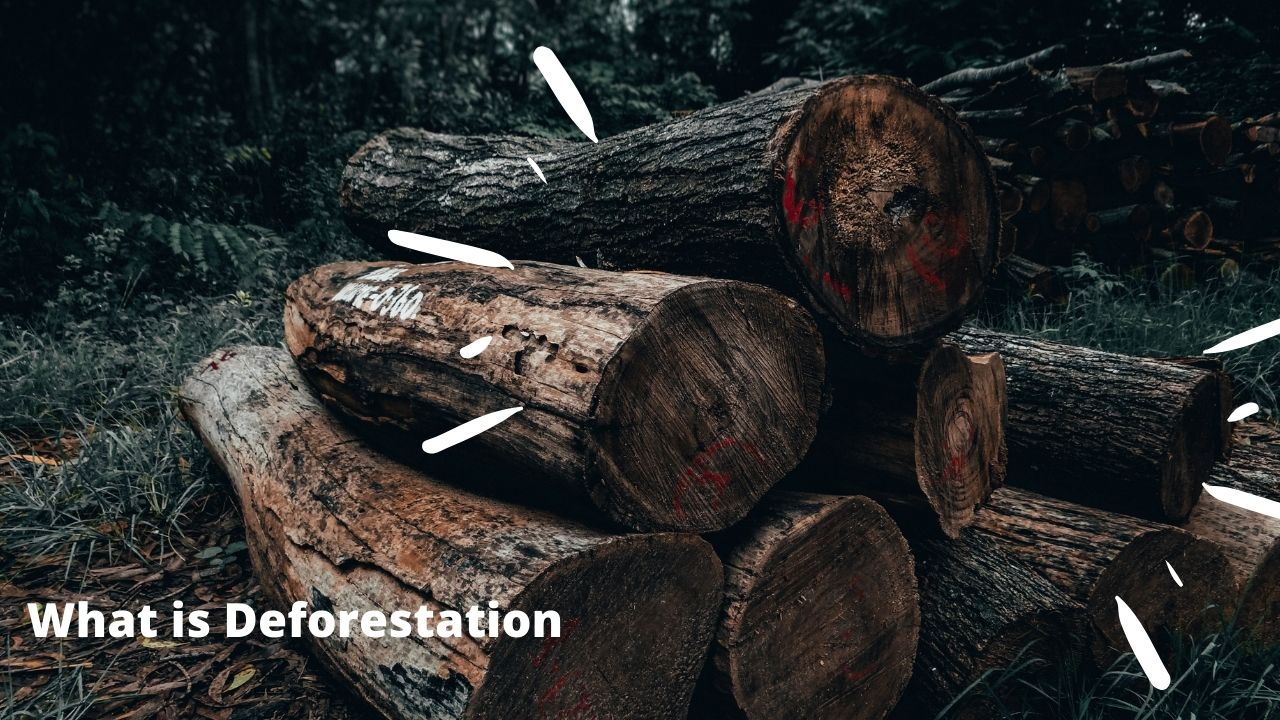You are currently viewing What is Deforestation, Meaning, Definition, Cause of Deforestation, Effect of Deforestation