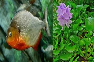 Read more about the article विनाशकारी प्रजातियांएवं गंगा स्वच्छता