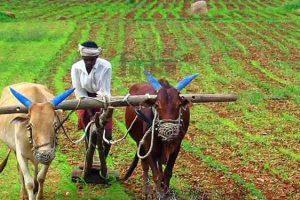 Read more about the article खेती पर बल, केंद्र में किसान
