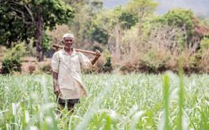 Read more about the article किसान बिल विरोध के बीच सरकार ने जारी की नई MSP