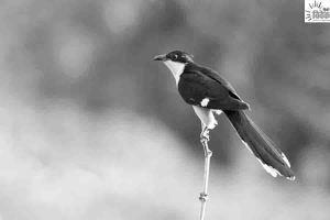 Read more about the article बारिश का संकेत देते पशु – पक्षी