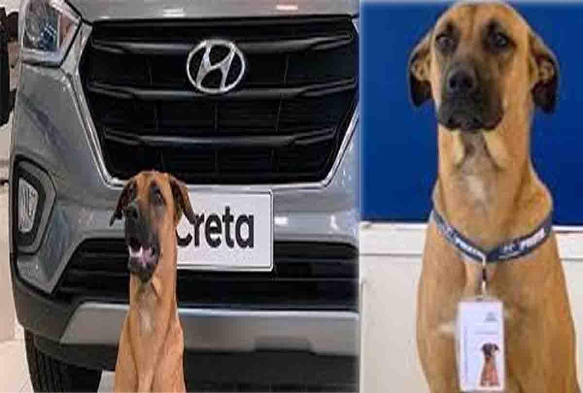 कार शोरूम में कुत्ता करता है ग्राहकों से डील, बिक्री में हुआ इजाफा