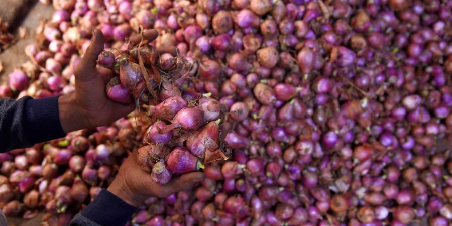 अब नहीं रुलाएगी प्याज की कीमत, किसान और आम जनता दोनों को होगा फायदा