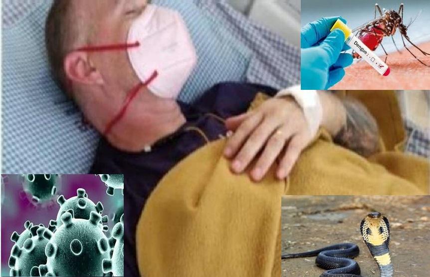पहले डेंगू फिर कोरोना से ठीक हुआ शख्स, उसके बाद कोबरा ने काटा फिर हुआ कुछ ऐसा