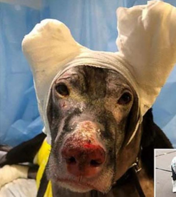 प्रेग्नेंट डॉगी ने अपनी जान की परवाह किए बिना बचाई चार लोगों की जान