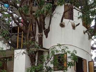 आम के पेड़