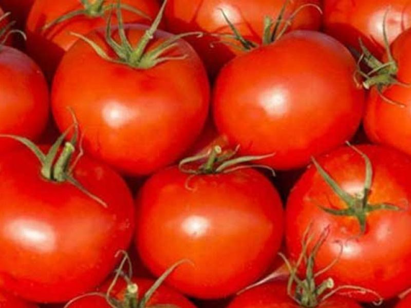 Tomato Price : बेमौसम बारिश ने बढ़ाए टमाटर के भाव, इतने रुपये किलो बिक रहा टमाटर, और बढ़ेगी कीमत