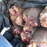 Gorakshaks find 2000kg beef