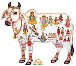 Gaumata - Cow Slaughter in India