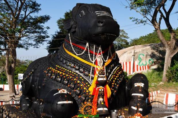 Nandi at Chamundi Hills Mysore