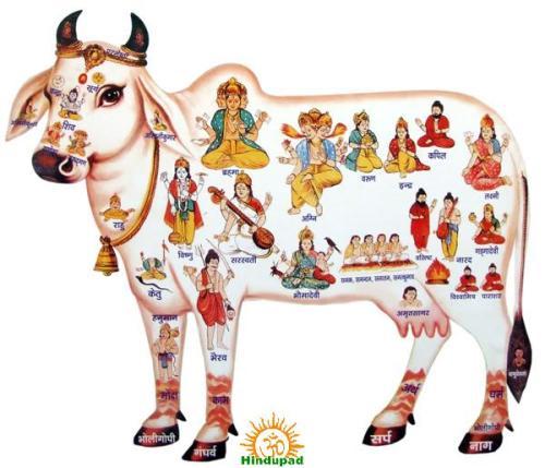Kamadhenu Puja Go Puja on Kanuma