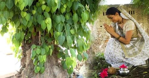 Peepal Tree puja