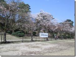 村松陸上公園桜