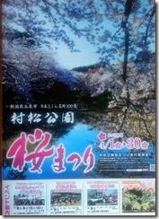 2017村松桜まつり (4)