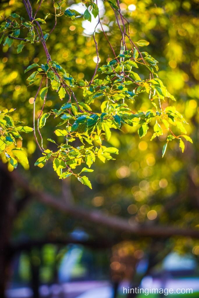 Foliage bokeh shot