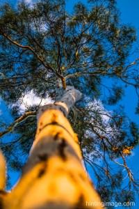 Tree lookup 2