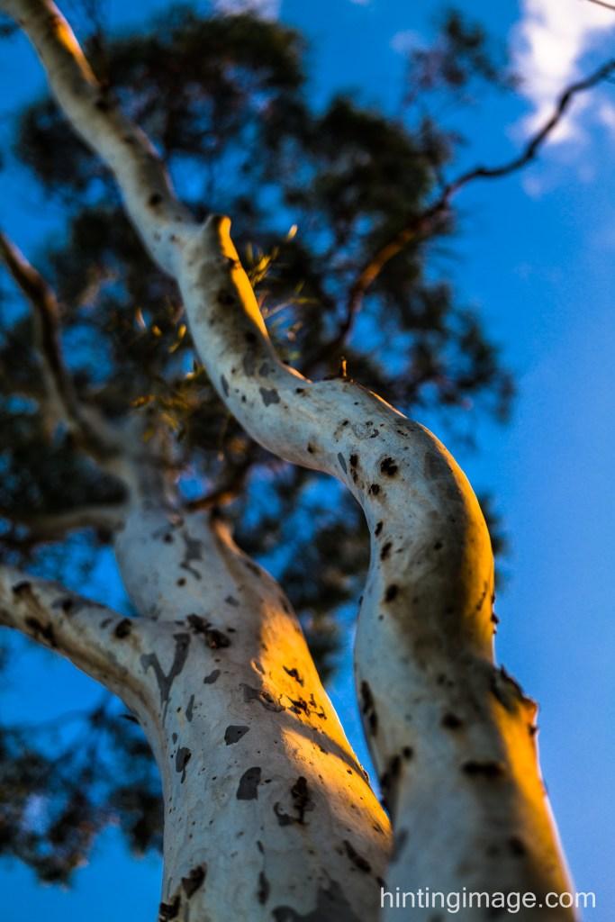 Tree Lookup 3