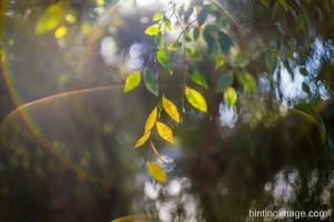 'Leaves'