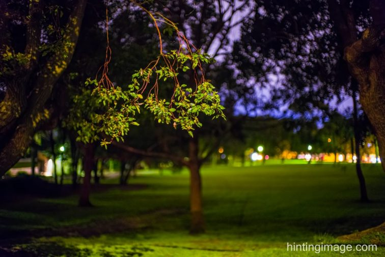 Night Tree 3