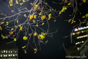 Night Tree 2