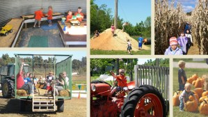 Hayrides Tractor Fun Pumpkin Patch Kids Family