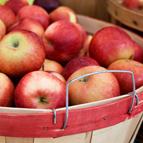 Hintons Fall Apples