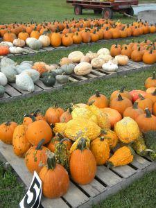 Piles o'Pumpkins